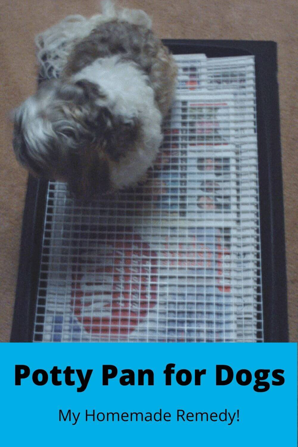 Potty pan for dogs - my homemade remedy!