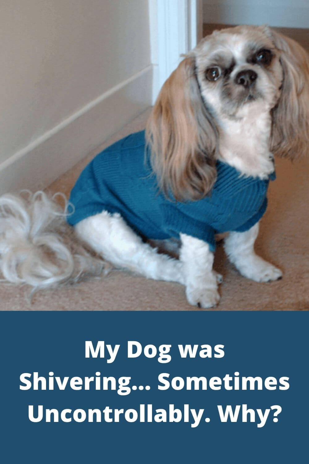 My dog was shivering- sometimes uncontrollably. Why?