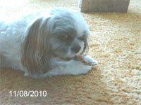2nd view of Nugget eating his Yam Yummy