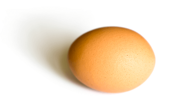 an egg used as a header image