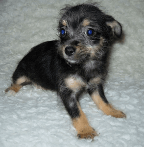 new-puppy-image02