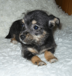 new-puppy-image03