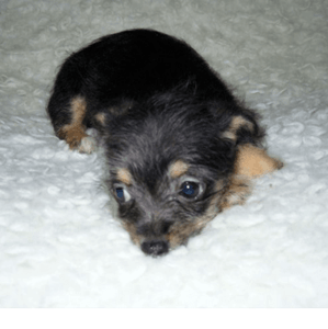 new-puppy-image04