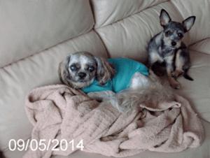 Nugget-and-Chloe-9-May-2104