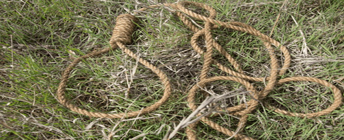 a picture of a rope tied with a noose at one end, laying on grass, used as a header image