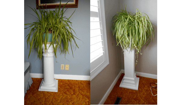 picture of two pillar styled plant stands, used as a header image