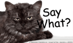 cat with an annoyed look on it's face with Say What? beside it, used as a header image