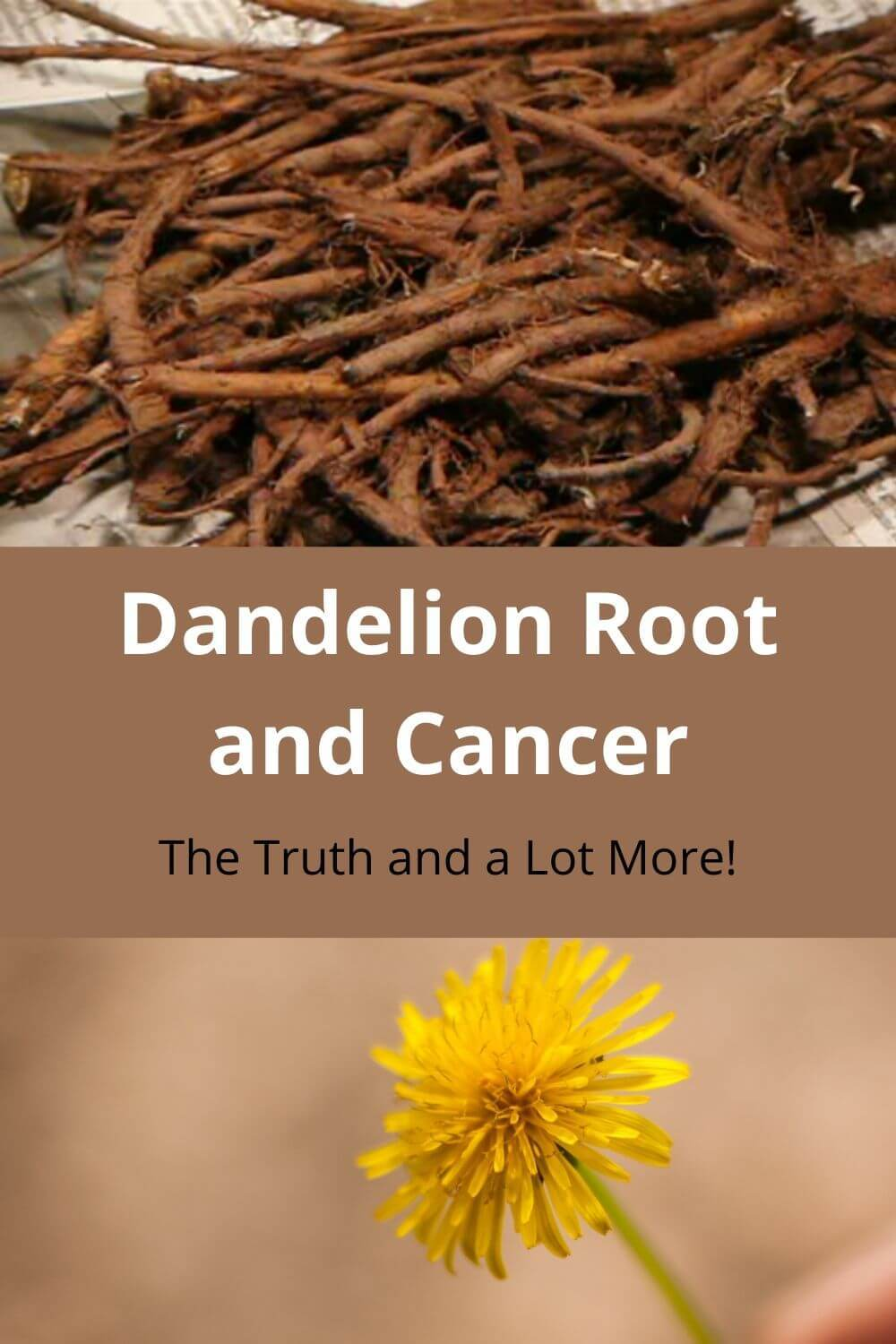 Dandelion Root and Cancer