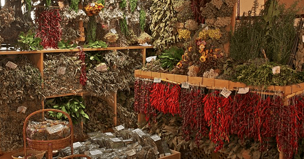 a room full of drying herbs hanging all over the place
