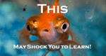"""a close-up view of what looks like a very shocked goldfish with text that reads """"This may shock you to learn!"""""""