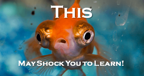 "a close-up view of what looks like a very shocked goldfish with text that reads ""This may shock you to learn!"""
