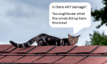 """cat on roof appears to be checking out the shingles. Speach bubble shows cat saying """"Is there ANY damage? You oughta see what the wind did up here this time!"""""""