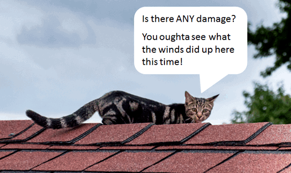 "cat on roof appears to be checking out the shingles. Speach bubble shows cat saying ""Is there ANY damage? You oughta see what the wind did up here this time!"""